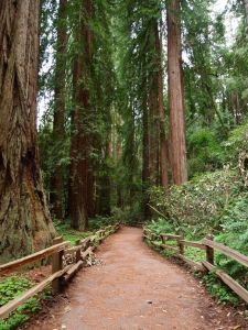 A Quick Detour to Muir Woods